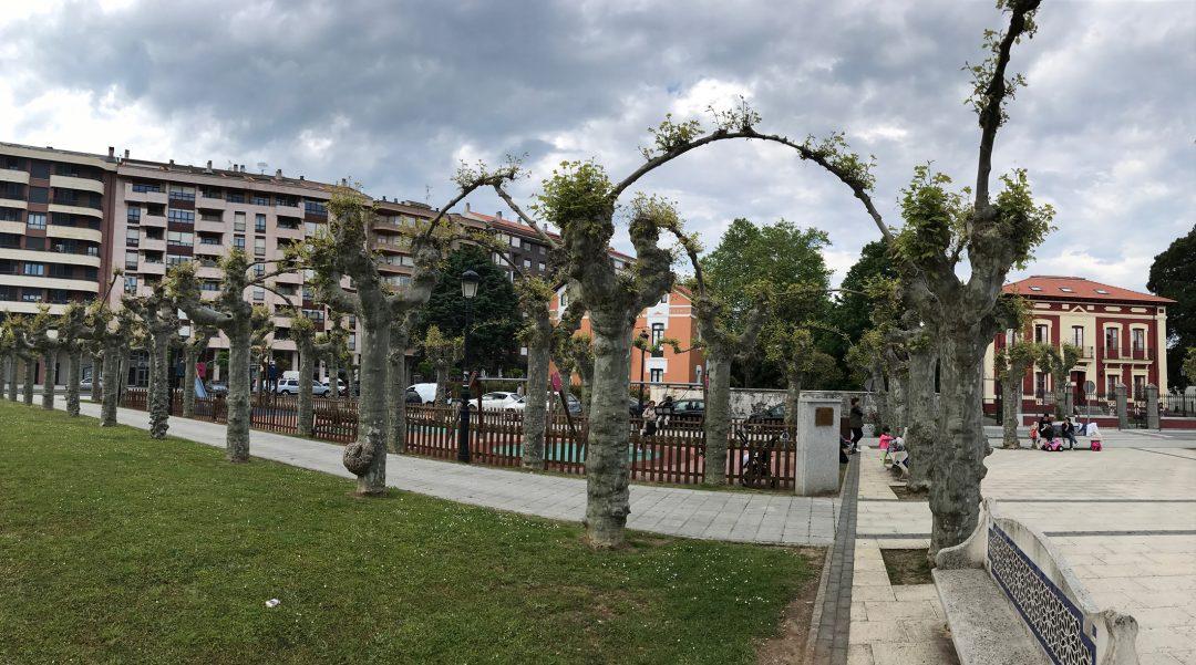 El Ayuntamiento de Colindres plantará un centenar de árboles en su campaña de reposición
